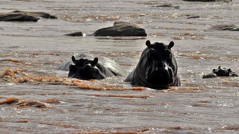 Hippo Sabaki River