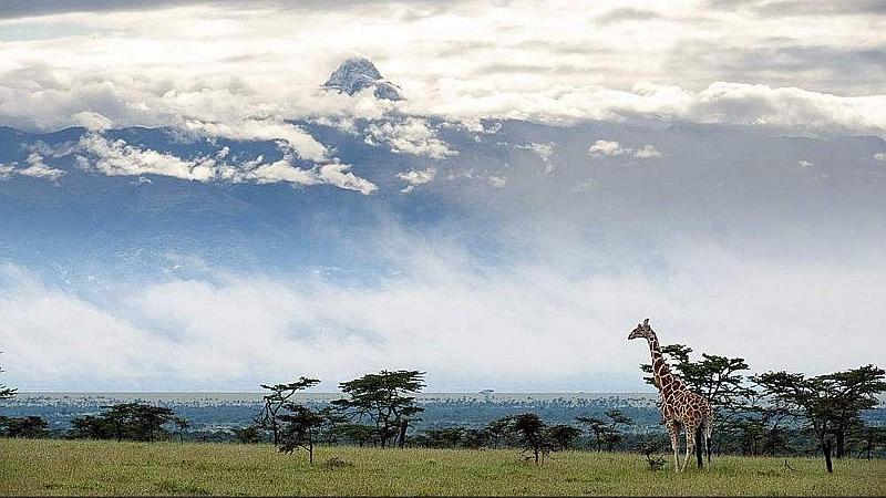 Giraffa reticolata e Monte Kenya