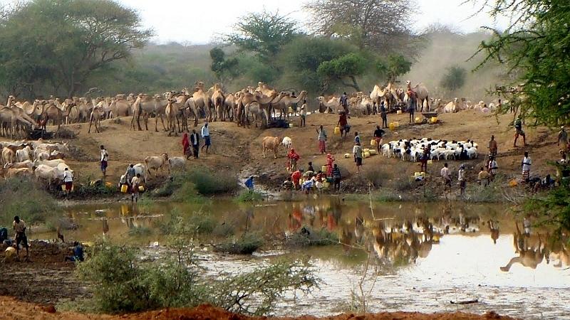 Pastori e il loro bestiame
