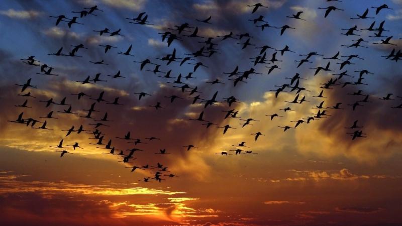 Fenicotteri in volo-Kenya