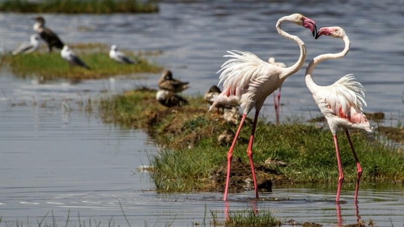Fenicotteri rosa-Kenya