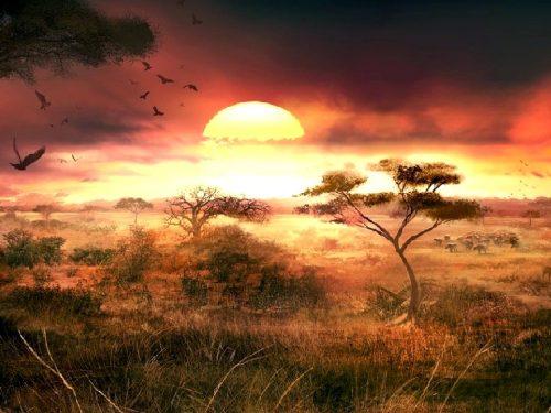 Kenya Safari-Parchi e Riserve-Fauna selvatica