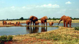 Branco di elefanti-Parco Nazionale Tsavo Est
