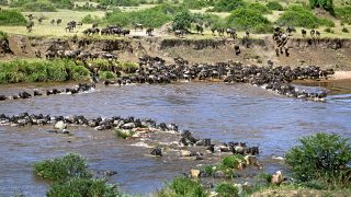Mara River-Gnu Migration in Kenya