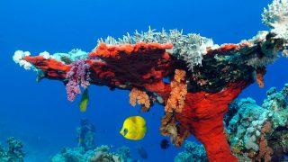 Il giardino di corallo-Isola di Wasini Kenya