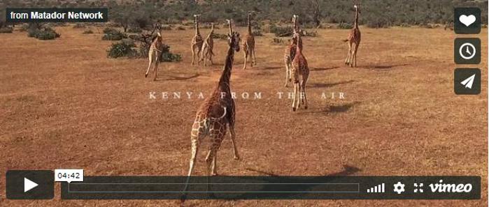 Kenya-Immagini dall'alto della fauna selvatica e dei paesaggi
