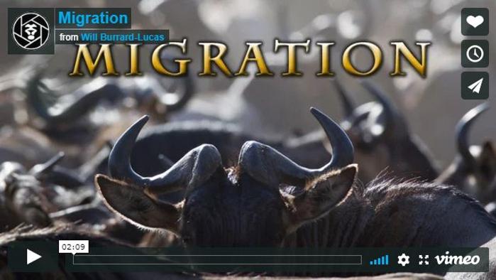 Kenya-Migrazione della fauna selvatica nel Masai Mara in Kenya e nel Serengeti in Tanzania