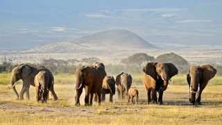 Parchi Nazionali e Riserve Naturali del Kenya