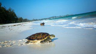 Tartaruga marina-Watamu Kenya