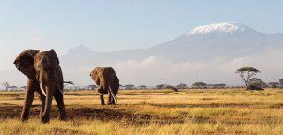 Viaggio virtuale attraverso il Kenya
