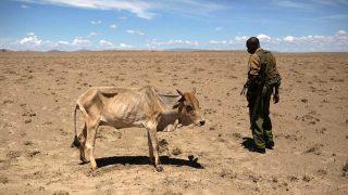 Siccità e Desertificazione in Kenya-Vacanze in Kenya