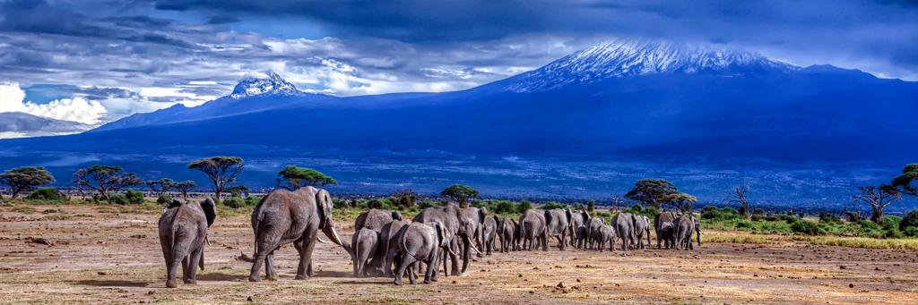 Gli elefanti tornano ai piedi del Monte Kilimanjaro
